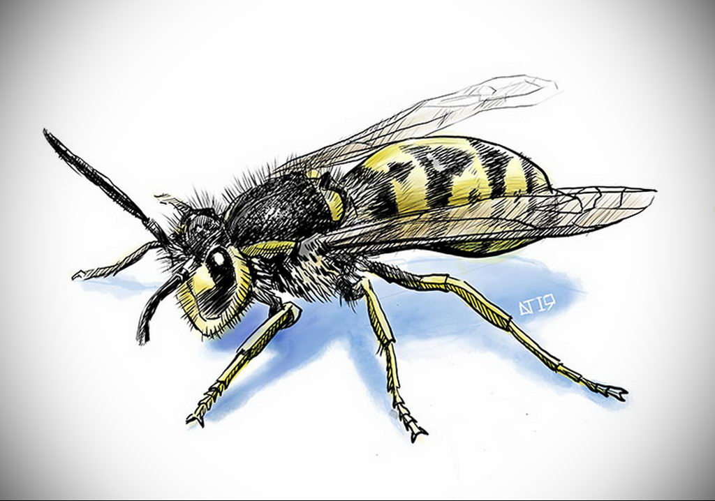 wasp tattoo sketch 07.01.2020 №3014 -wasp tattoo sketch- tatufoto.com