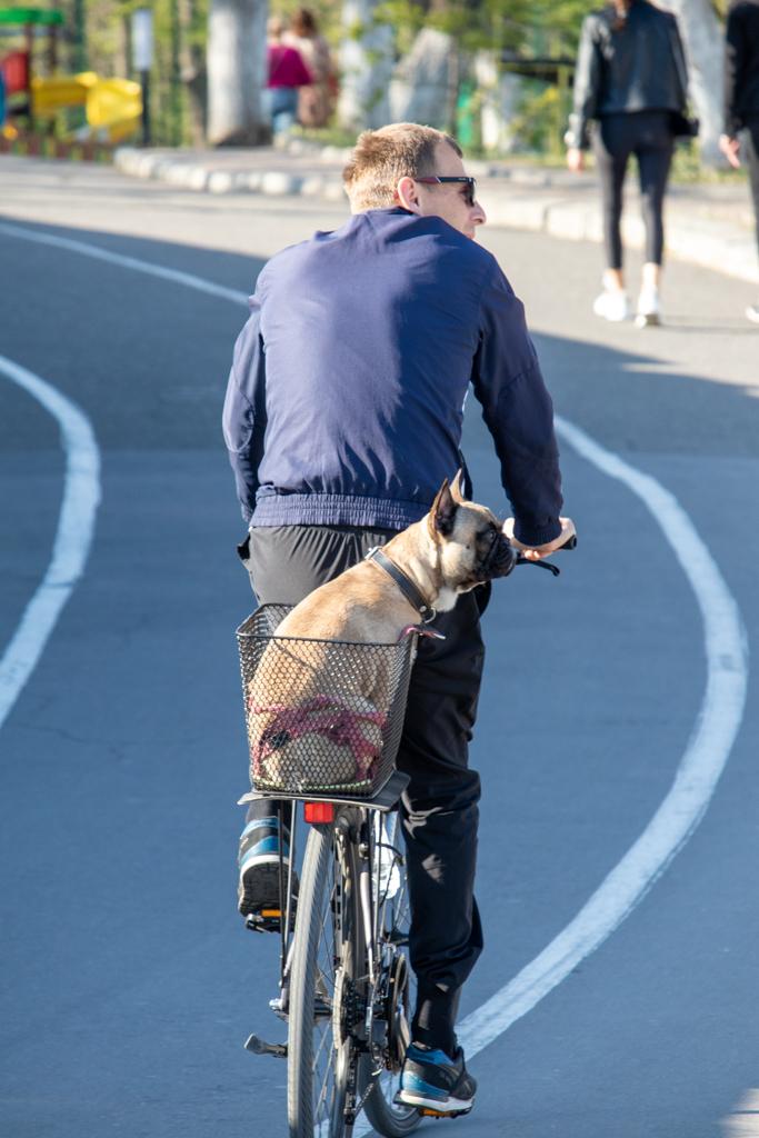 Фото собаки которую катают на велосипеде - Уличная татуировка (Street tattoo) № 03 – 11.05.2020 для tatufoto.com 1