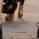Тату с собакой которая дает пять хозяину – Уличная татуировка (Street tattoo) № 05 – 15.06.2020 для tatufoto.com 3