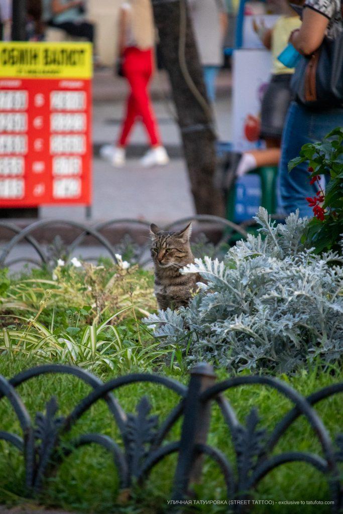 Фото кота в цветах и траве --Уличная тату-street tattoo-21.09.2020-tatufoto.com 1