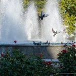 Фото людей у фонтана около Оперного – 17.09.2020 – tatufoto.com 16