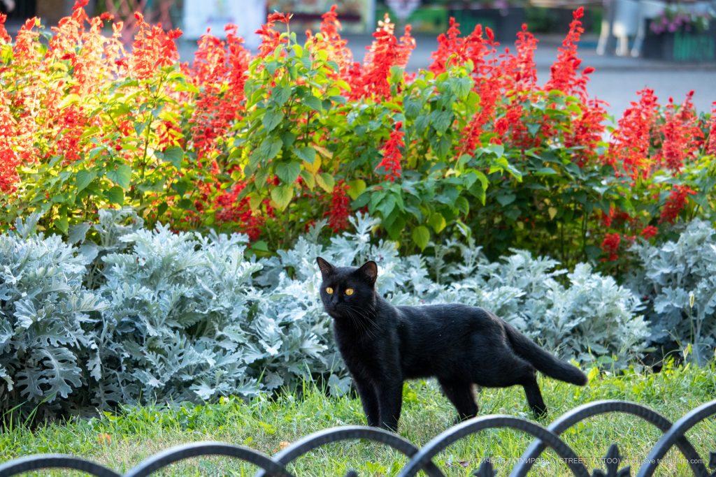 Фото черного кота в цветах на Дерибасовской – 17.09.2020 – tatufoto.com 1