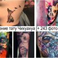 Значение тату Чихуахуа - информация про особенности и фото рисунков тату