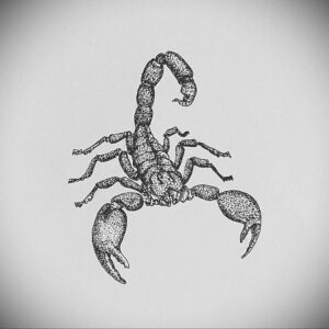 Эскиз для татуировки скорпион 16.01.2021 №0004 -scorpion tattoo sketch- tatufoto.com