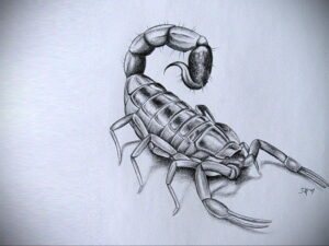 Эскиз для татуировки скорпион 16.01.2021 №0014 -scorpion tattoo sketch- tatufoto.com