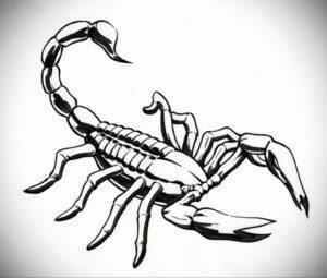 Эскиз для татуировки скорпион 16.01.2021 №0040 -scorpion tattoo sketch- tatufoto.com