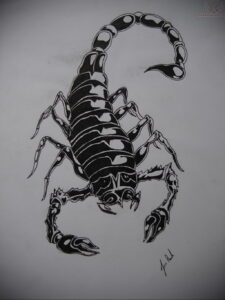 Эскиз для татуировки скорпион 16.01.2021 №0044 -scorpion tattoo sketch- tatufoto.com