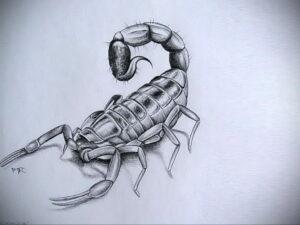 Эскиз для татуировки скорпион 16.01.2021 №0053 -scorpion tattoo sketch- tatufoto.com