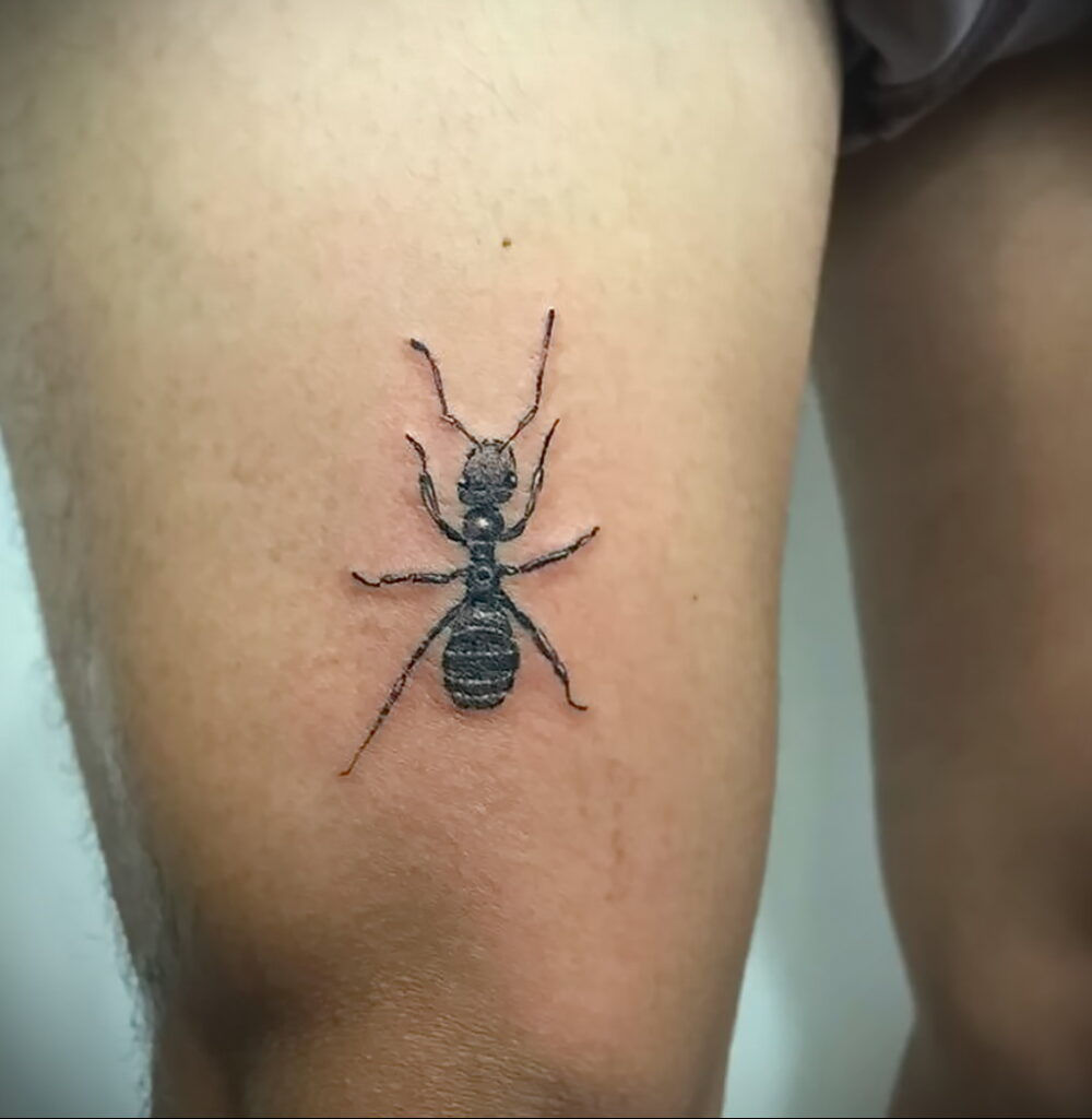 Фото пример рисунка татуировки с муравьем 21.03.2021 №040 - ant tattoo - tatufoto.com