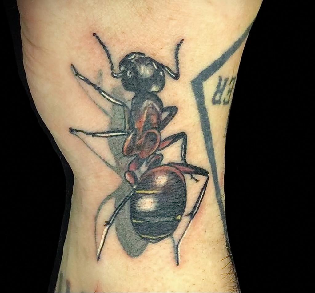 Фото пример рисунка татуировки с муравьем 21.03.2021 №100 - ant tattoo - tatufoto.com