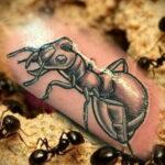 Фото пример рисунка татуировки с муравьем 21.03.2021 №101 - ant tattoo - tatufoto.com