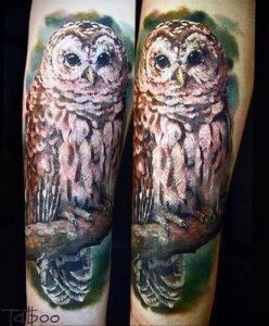 пример рисунка тату сова реализм 15.02.2021 №0081 - owl tattoo realism - tatufoto.com