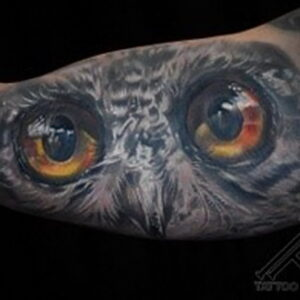 пример рисунка тату сова реализм 15.02.2021 №0120 - owl tattoo realism - tatufoto.com