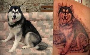 Тату с собакой породы Хаски 08.03.2021 №037 - husky tattoo - tatufoto.com